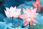 Kỳ lân Phong Thủy Bằng Đồng| tránh tà, hóa giải sát khí, cải vận mang đến may mắn và bình an